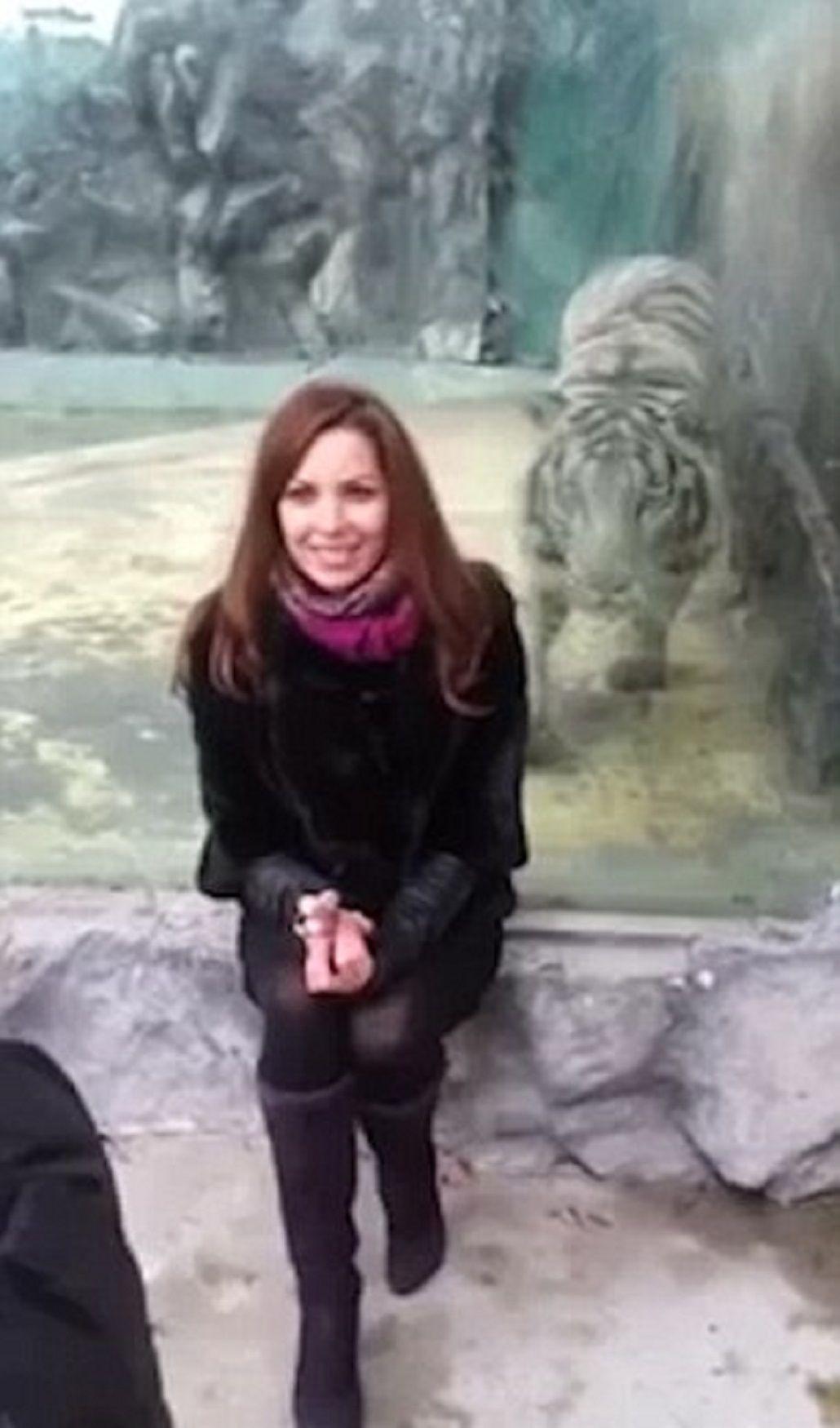 Otro ataque en un zoo: ahora, un tigre se abalanzó sobre una chica