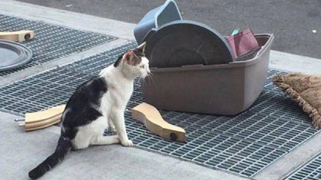 La triste historia del gato abandonado en Brooklyn que se viralizó en Facebook