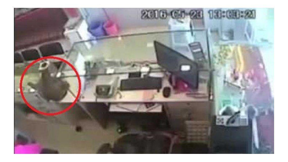 VIDEO: El ladrón más peligroso de la India es un mono