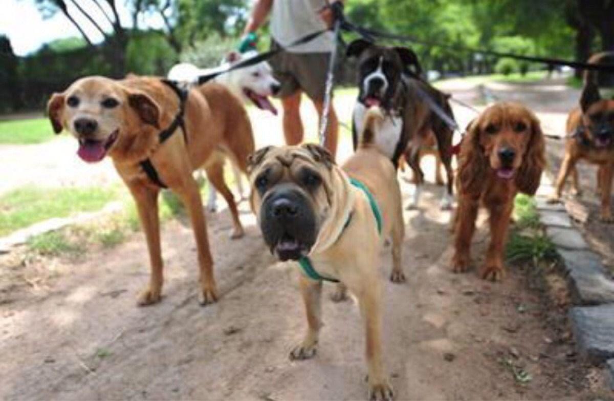 Amores perros: Argentina, el país con más mascotas por habitante