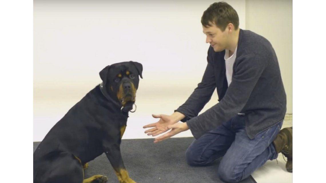 VIDEO: ¿Cómo reaccionan los perros ante un truco de magia?