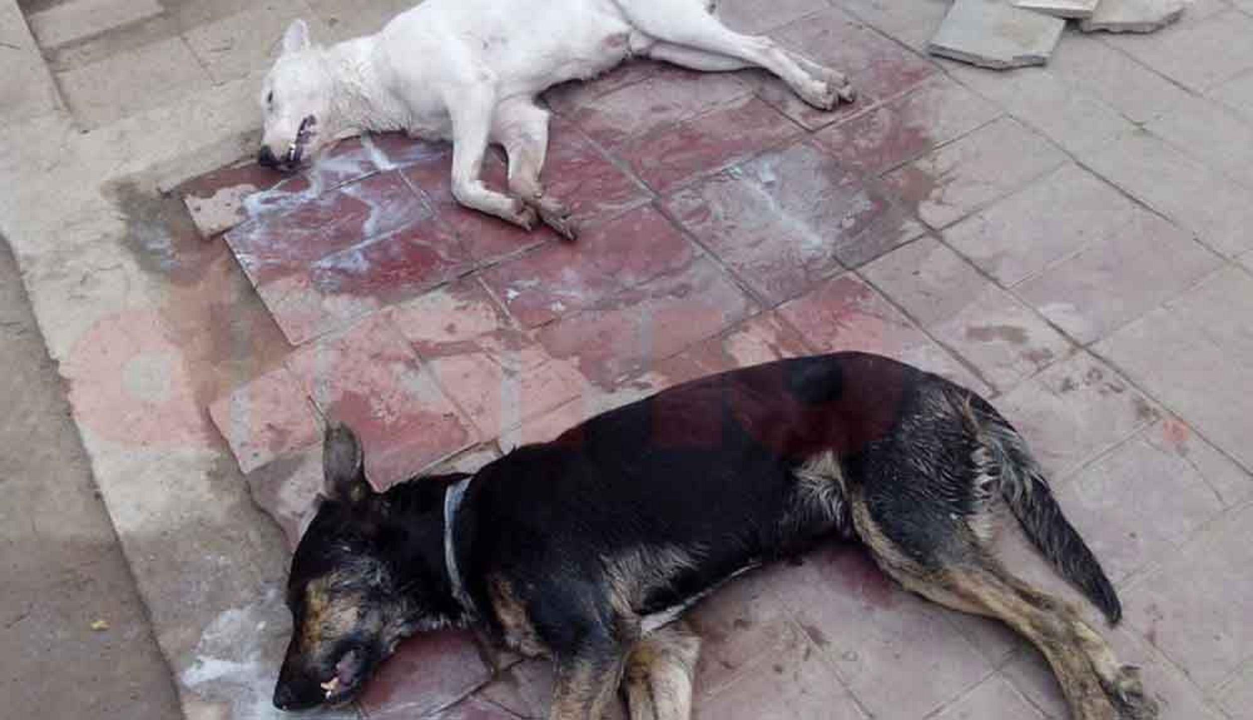 Desalmados: envenenaron a seis perros con comida