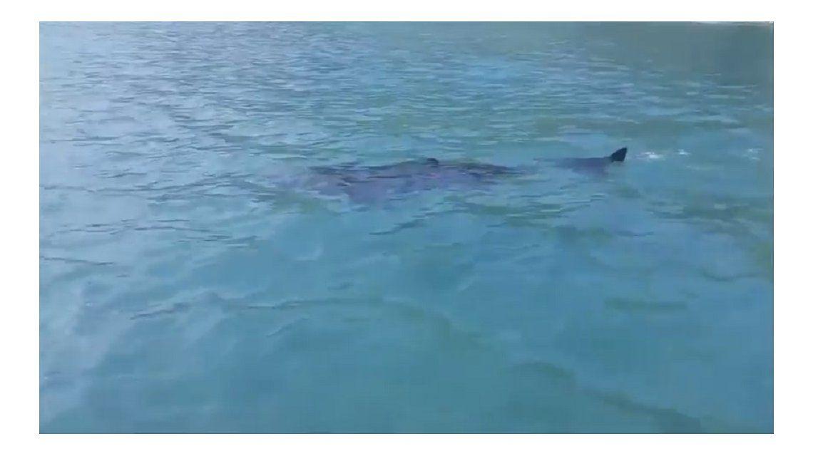 Terror en una playa del Reino Unido por la aparición de un tiburón gigante