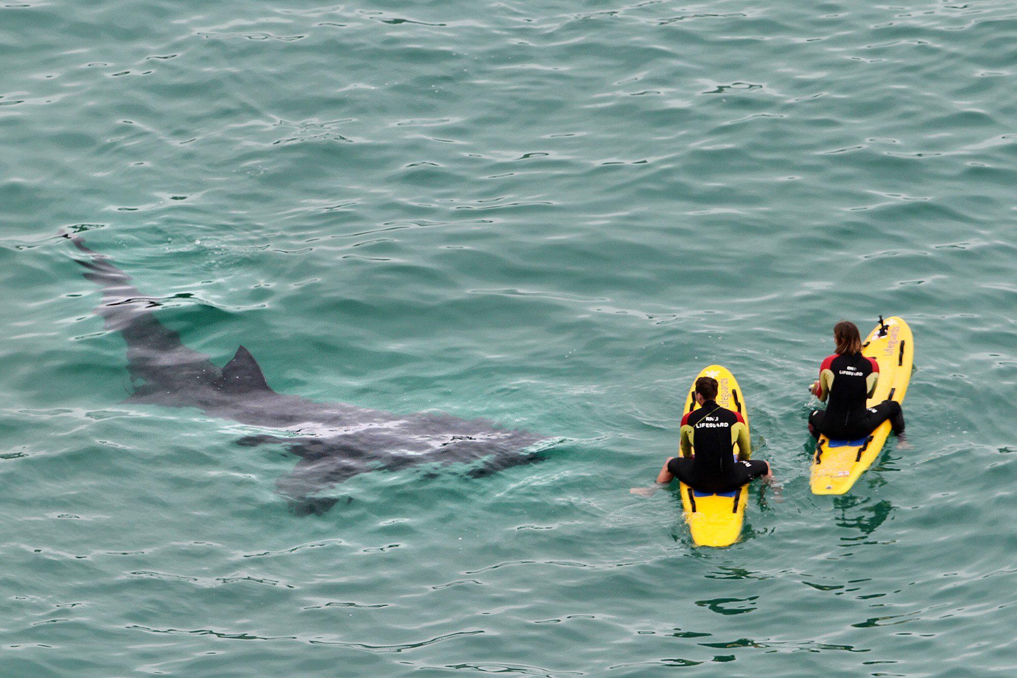 Un grupo de tiburones aterroriza a dos guardavidas surfistas