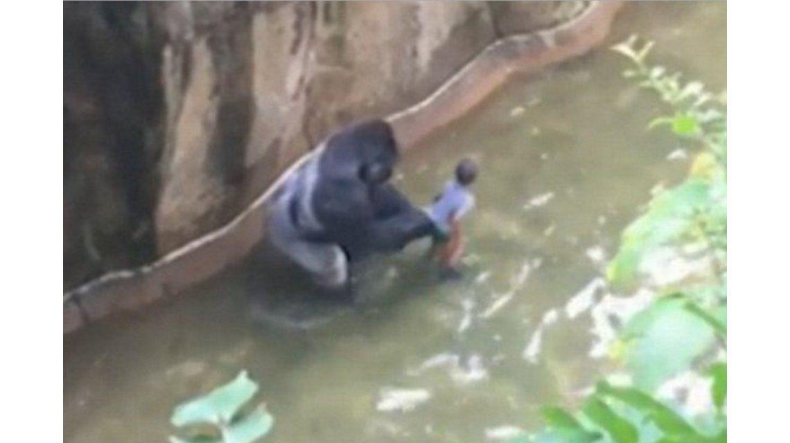 Revelan la llamada al 911 que hizo la madre del chico que cayó en la jaula de un gorila