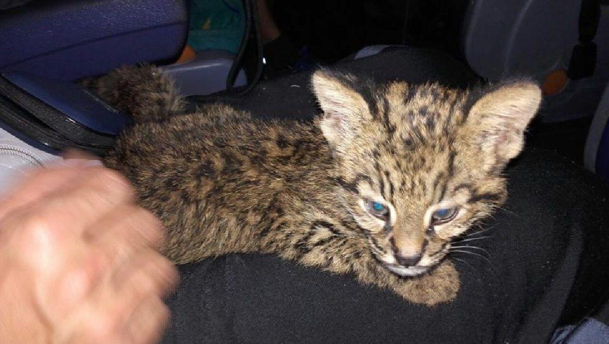 Pensaron que habían rescatado a un gatito y se llevaron una sorpresa