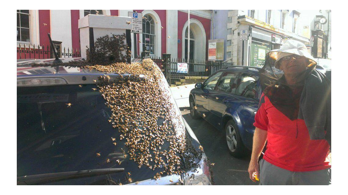 Un enjambre de 20 mil abejas persigue el auto donde quedó atrapada su reina