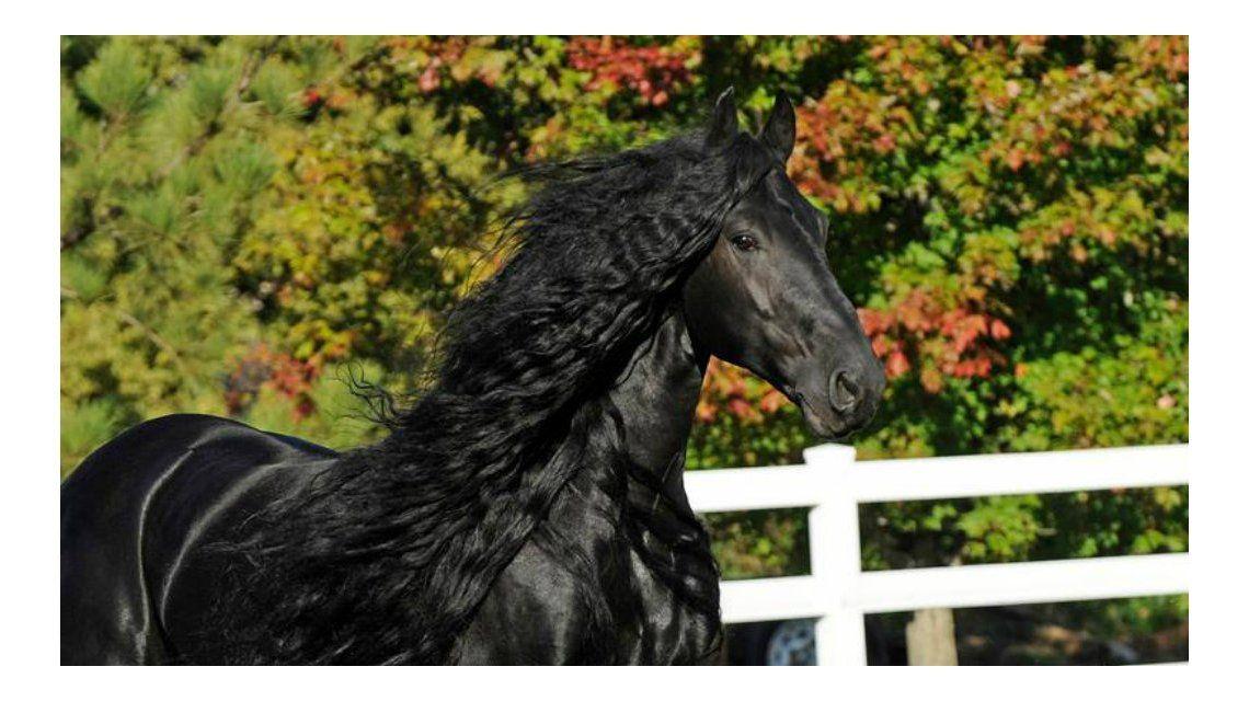 Aseguran que este es el caballo de pura sangre más bello del mundo