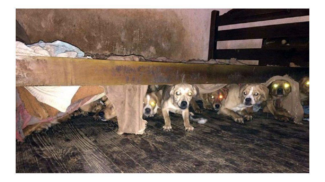 La conmovedora historia de los 47 perritos rescatados en La Paternal