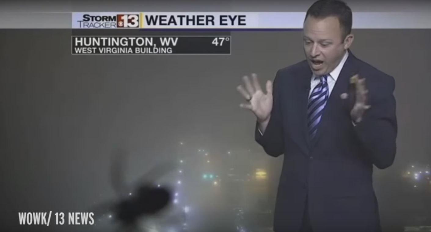 Con Angeli no pasa: un presentador del clima grita en vivo, asustado por una araña
