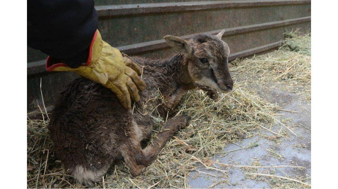 Crisis en el Zoo de Mendoza: se registaron más muertes y denuncian que se podían evitar