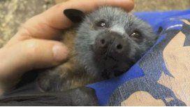 Caricia a un murciélago huérfano