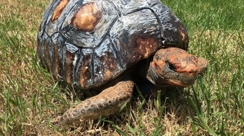 Una tortuga perdió su caparazón y le hicieron uno con una impresora 3D