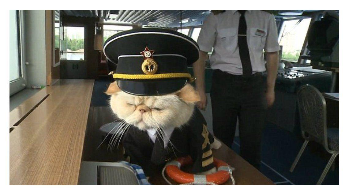 Este gato se convirtió en el capitán favorito de los turistas en Rusia