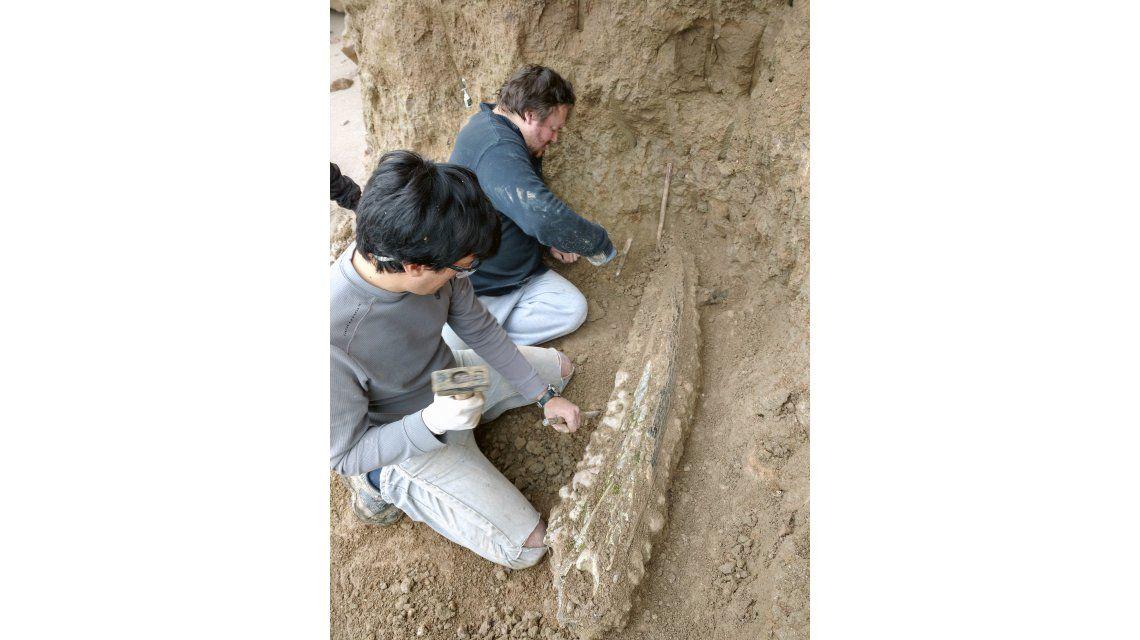 Hallan restos de elefante prehistórico en Mar del Plata