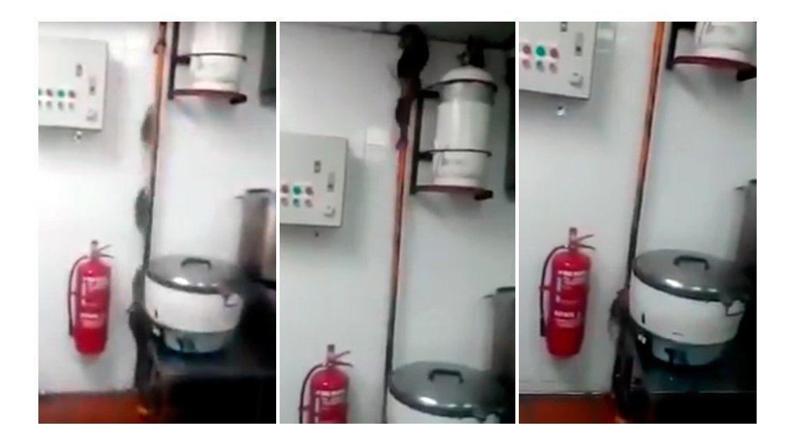 VIDEO: Decenas de ratas escapan de una cocina
