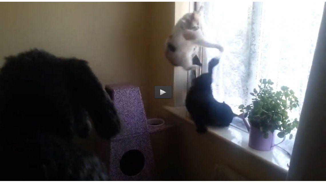 VIDEO: Un hombre se disfraza de perro y aterra a su gato