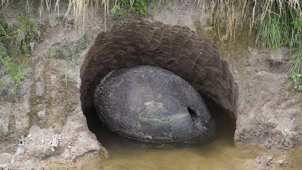 Sorprendente hallazgo: encontraron en Punta Alta los restos de un gliptodonte