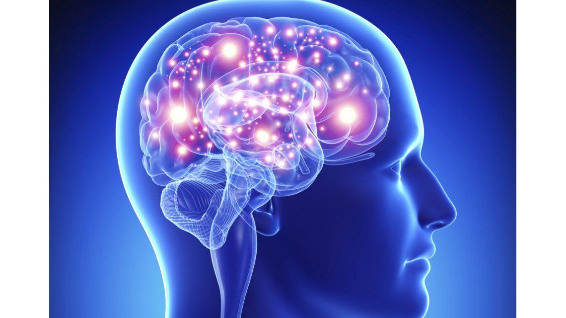 Avanza el proyecto para volver a la vida partes del cerebro ...