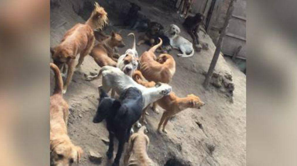 Difunden un video de canibalismo entre perros abandonados en un refugio