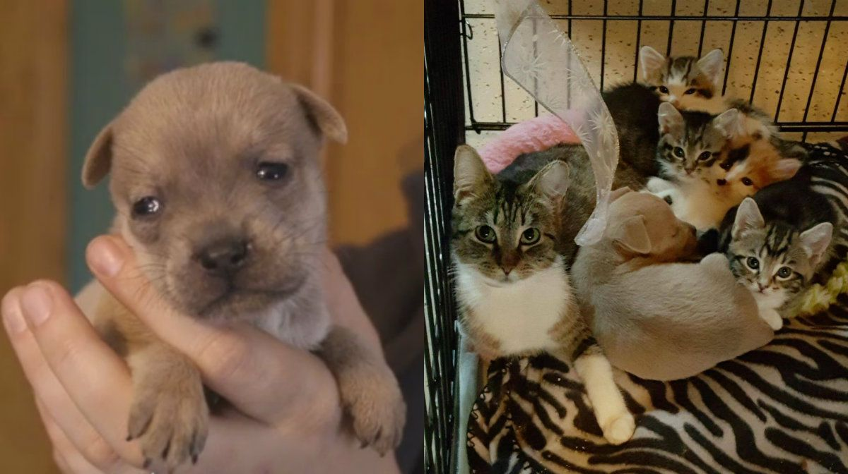 Un perro huérfano se salva de la muerte gracias a su madre adoptiva felina