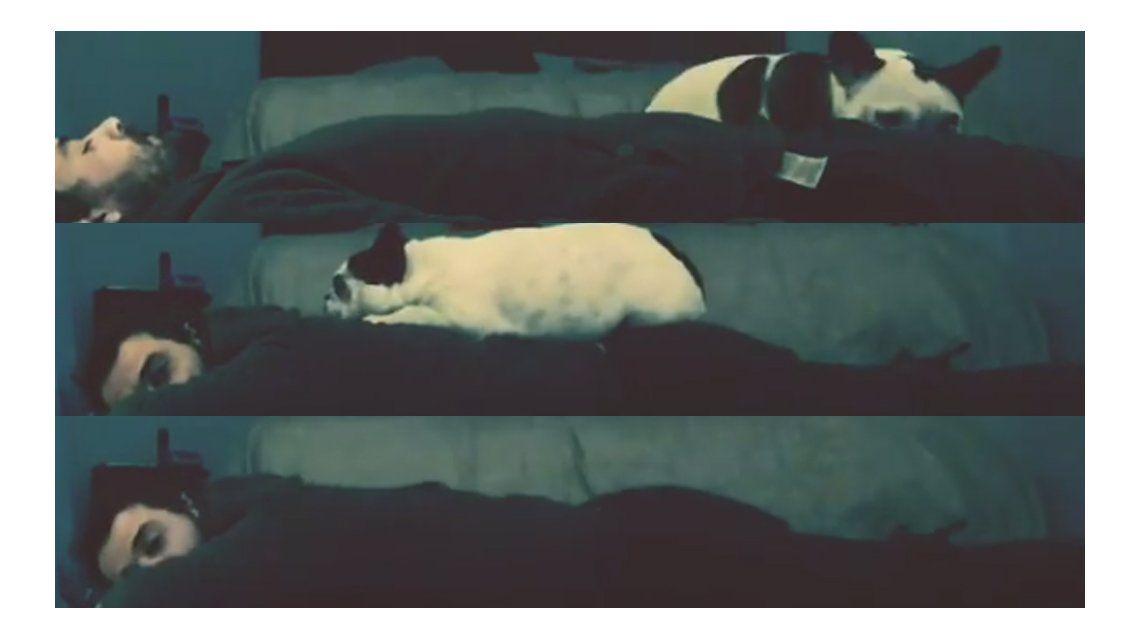 Video: la divertida escena de Pedro Alfonso con su perra en Instagram