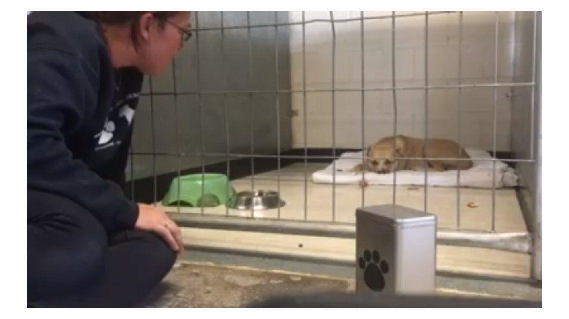 Una perrita rescatada de la calle logra vencer su depresión gracias a un chico