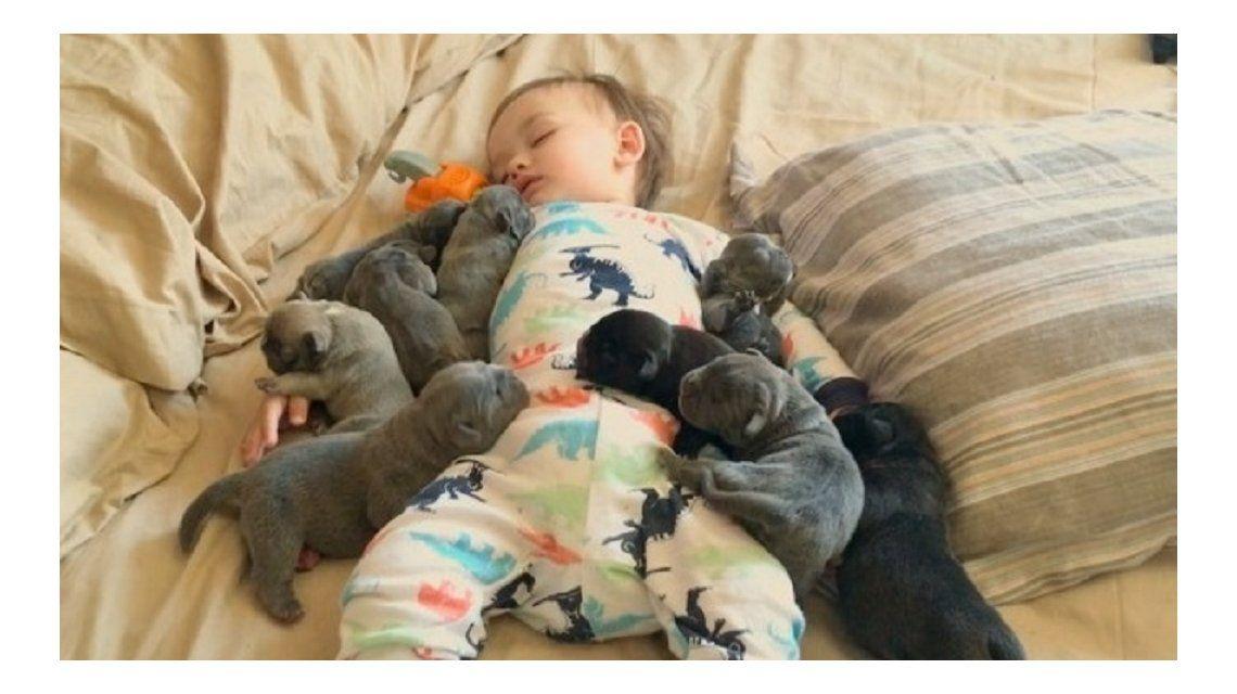 Un nene cubierto de cachorros encontró el mejor modo de pasar el frío