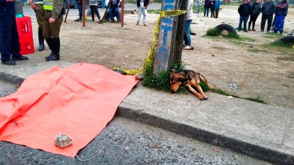 La triste historia de Doki, el perro que acompañó a su amo hasta el último minuto