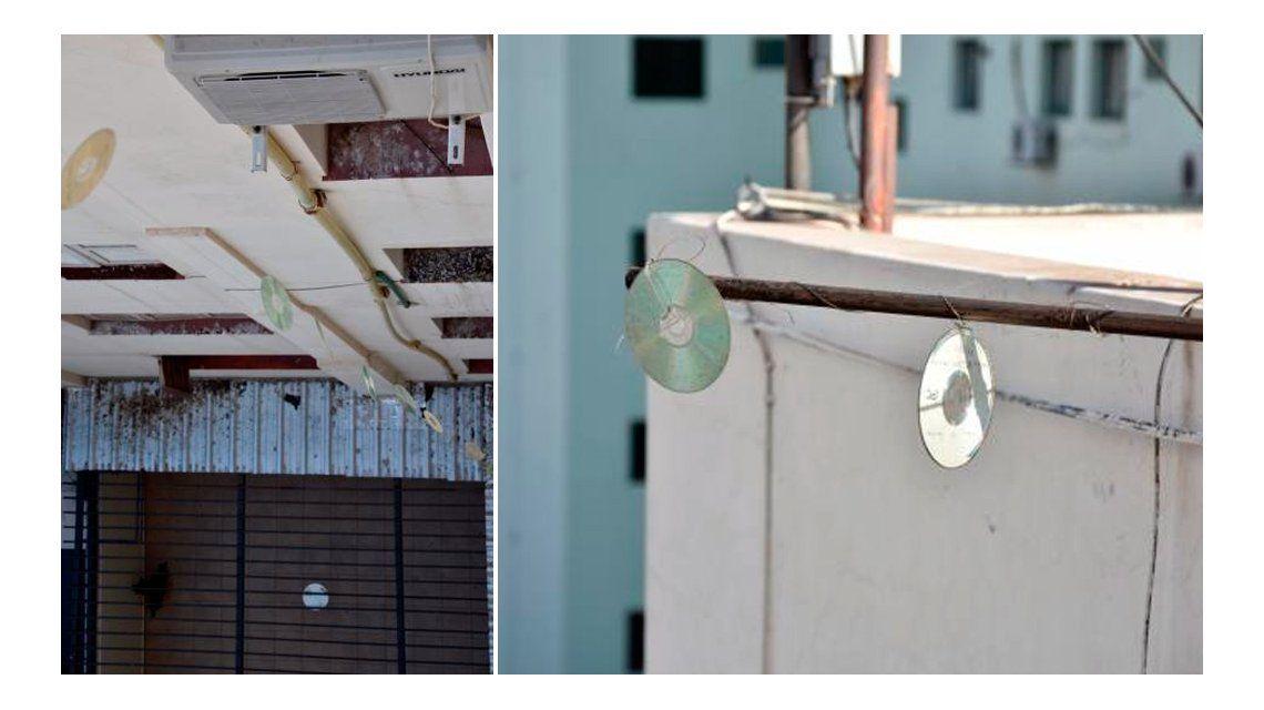 El curioso método que utilizan en un edificio para espantar a las palomas