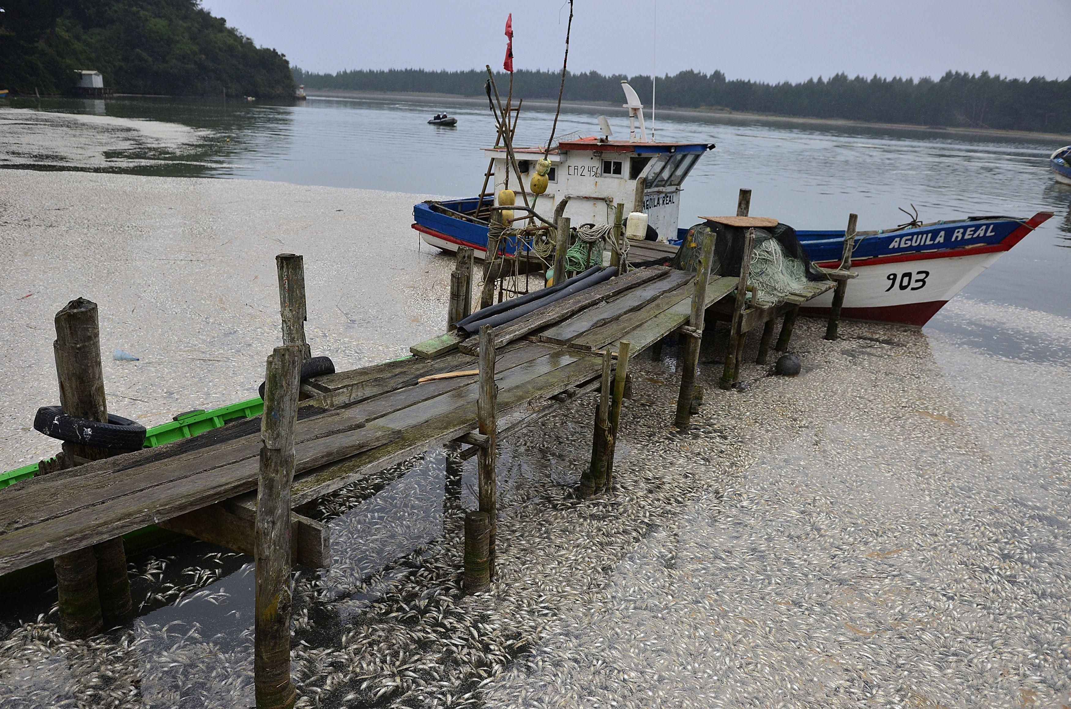 Retiran 1.200 toneladas de sardinas que murieron varadas en la costa de Chile