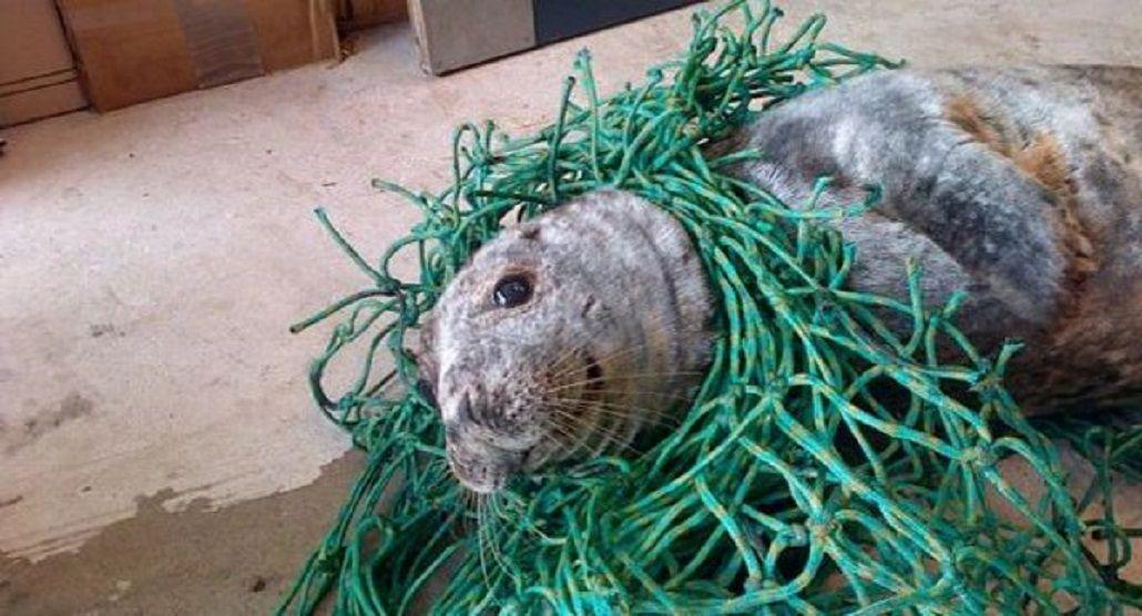Rescataron a una foca atrapada en una red de pesca