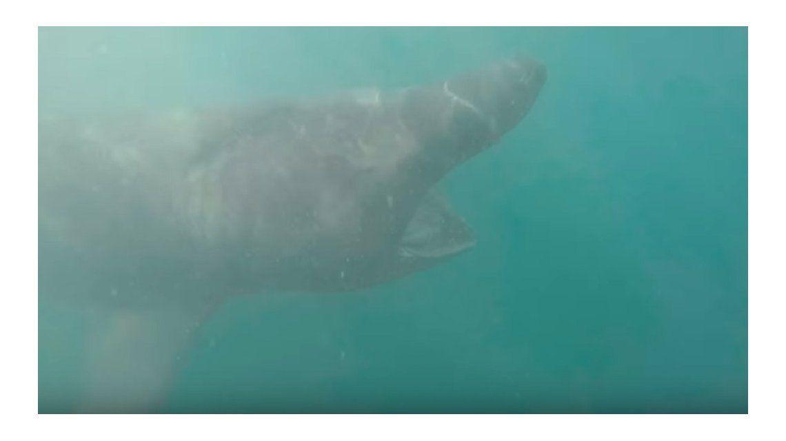 La valiente reacción de un hombre al chocar con un tiburón