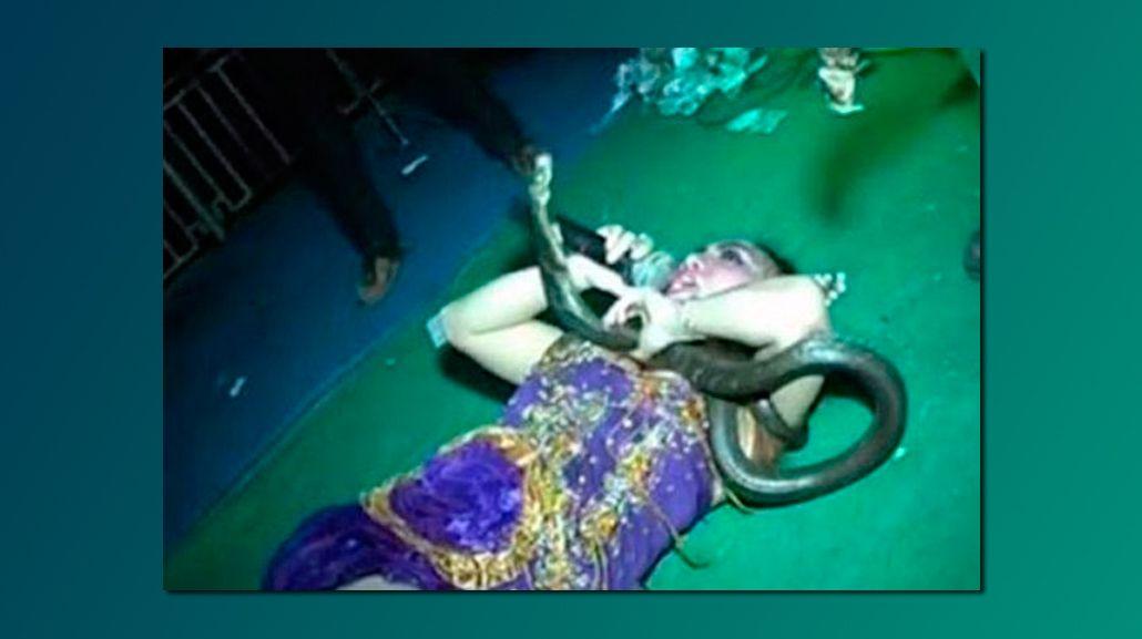 Murió una cantante sobre el escenario tras ser mordida por una serpiente venenosa