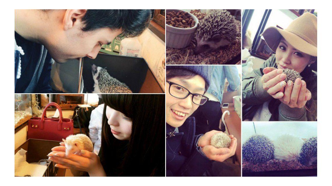 La elegancia del erizo: abrieron un café dedicado a los animalitos en Japón