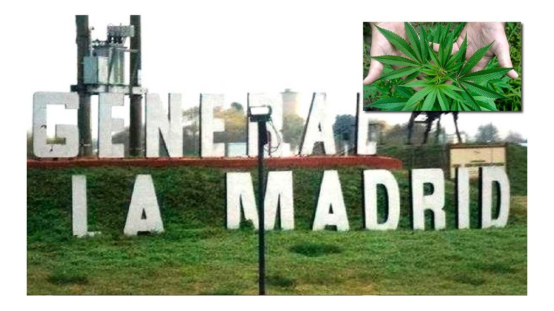 General La Madrid, el pueblo que quiere ser productor de marihuana medicinal