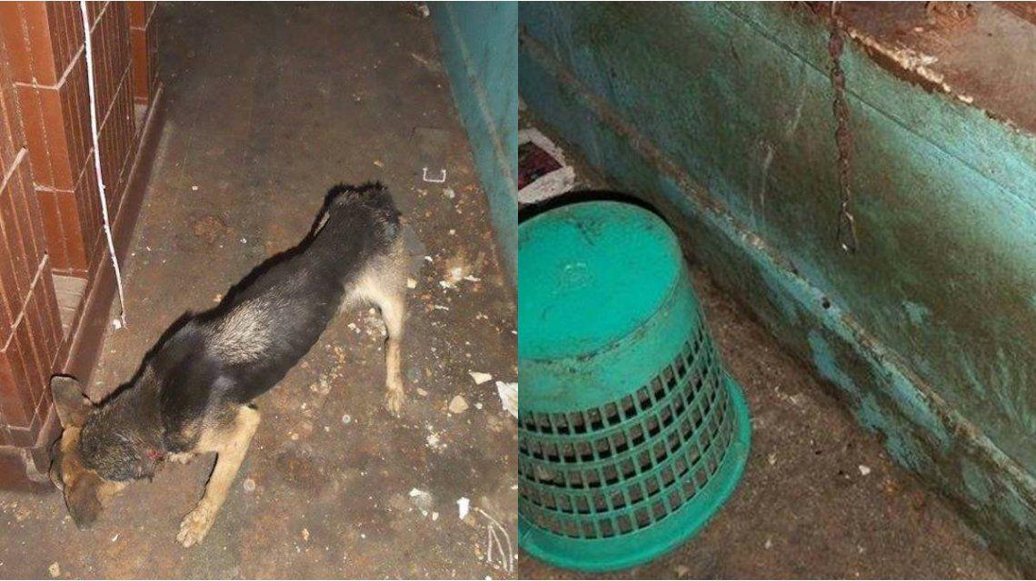 Rescatan a una perra que saltó por el balcón donde estaba encerrada