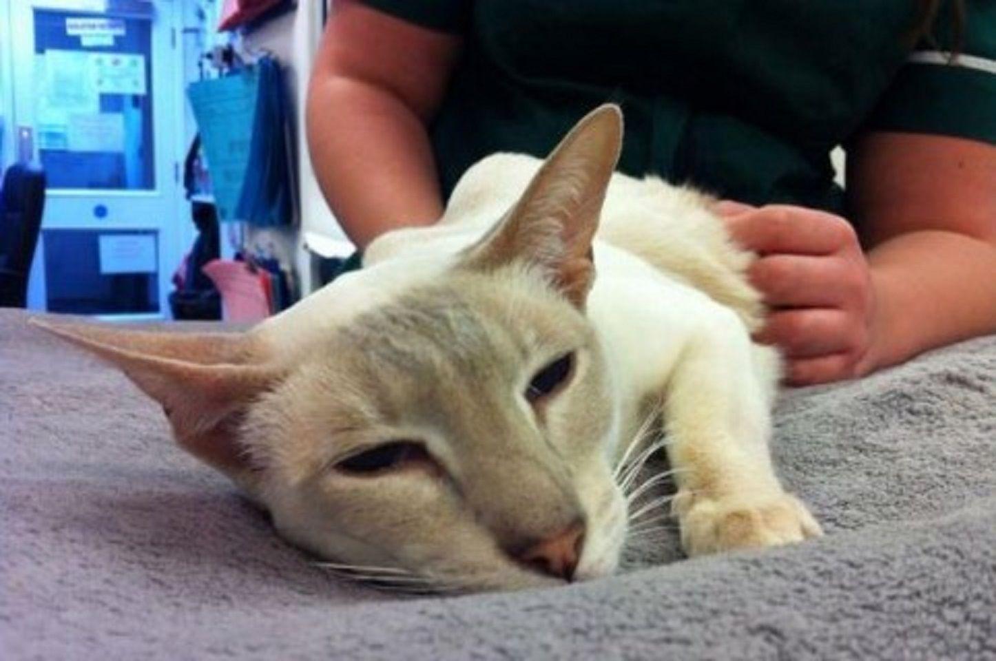 Una gata sobrevivió 8 días en una caja tras ser mandada accidentalmente por correo