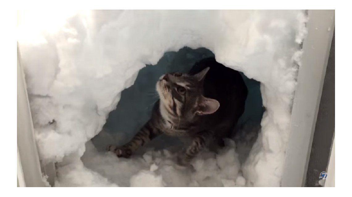 Un gato muy hábil se construyó un iglú tras una copiosa nevada