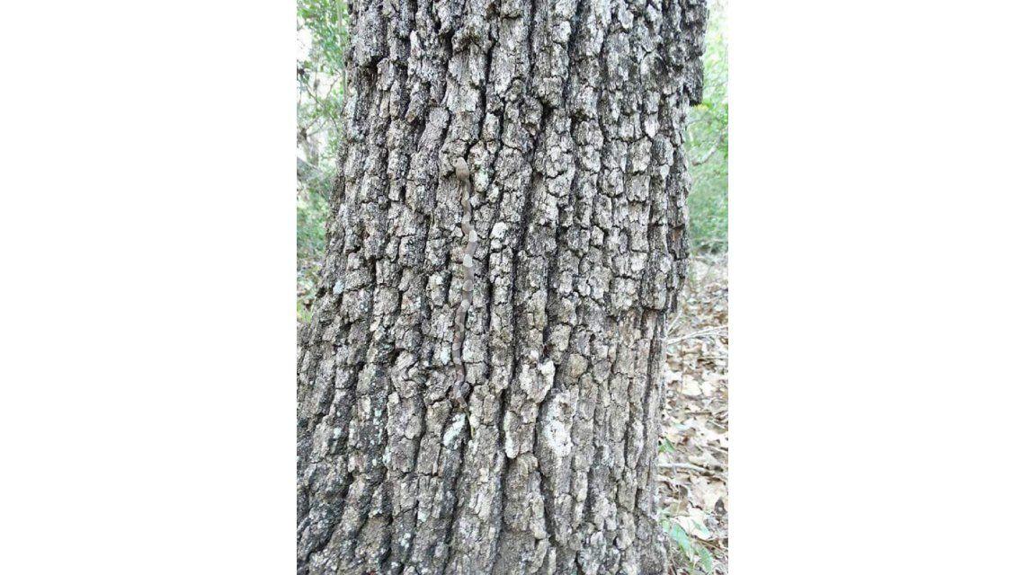 Nuevo viral: ¿podés encontrar al animal escondido en este árbol?