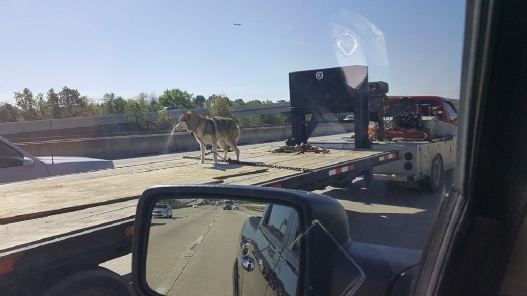 La foto de un perro arriba de un camión que se hizo viral en Estados Unidos