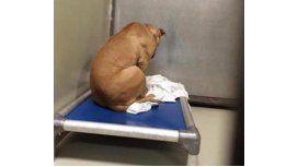 Un perro se deprime porque no lo adoptan