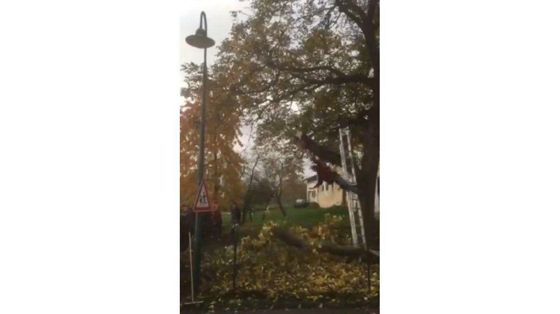 La venganza de los árboles: cortaba una rama que le tiró la escalera