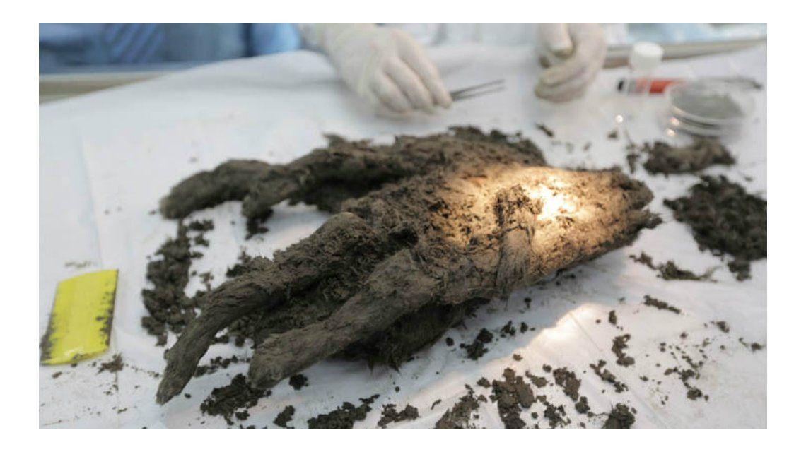 Aseguran que podrían clonar un perro de hace 12.400 años