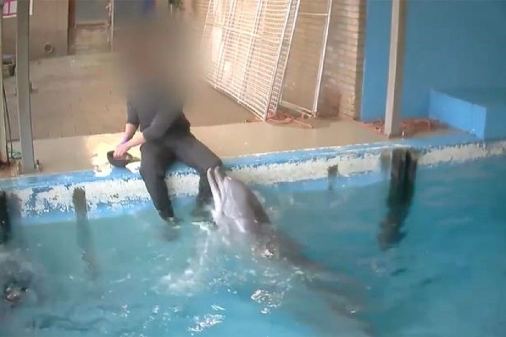 Investigan un caso de abuso sexual a un delfín en Holanda