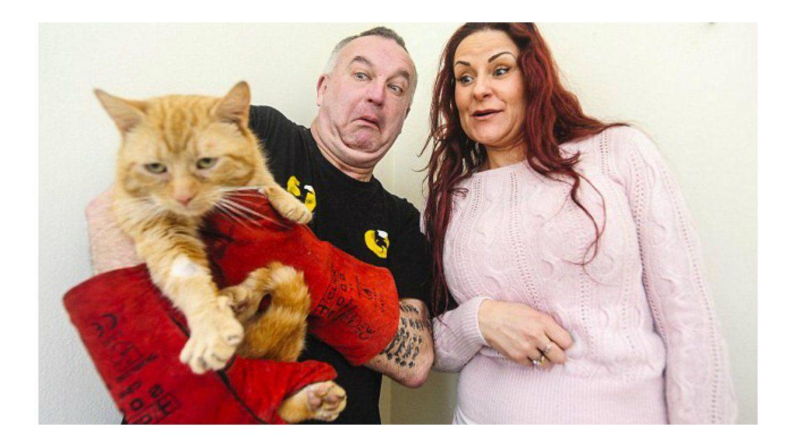 Un gato bipolar atacó a su dueña y la mandó al hospital por las heridas