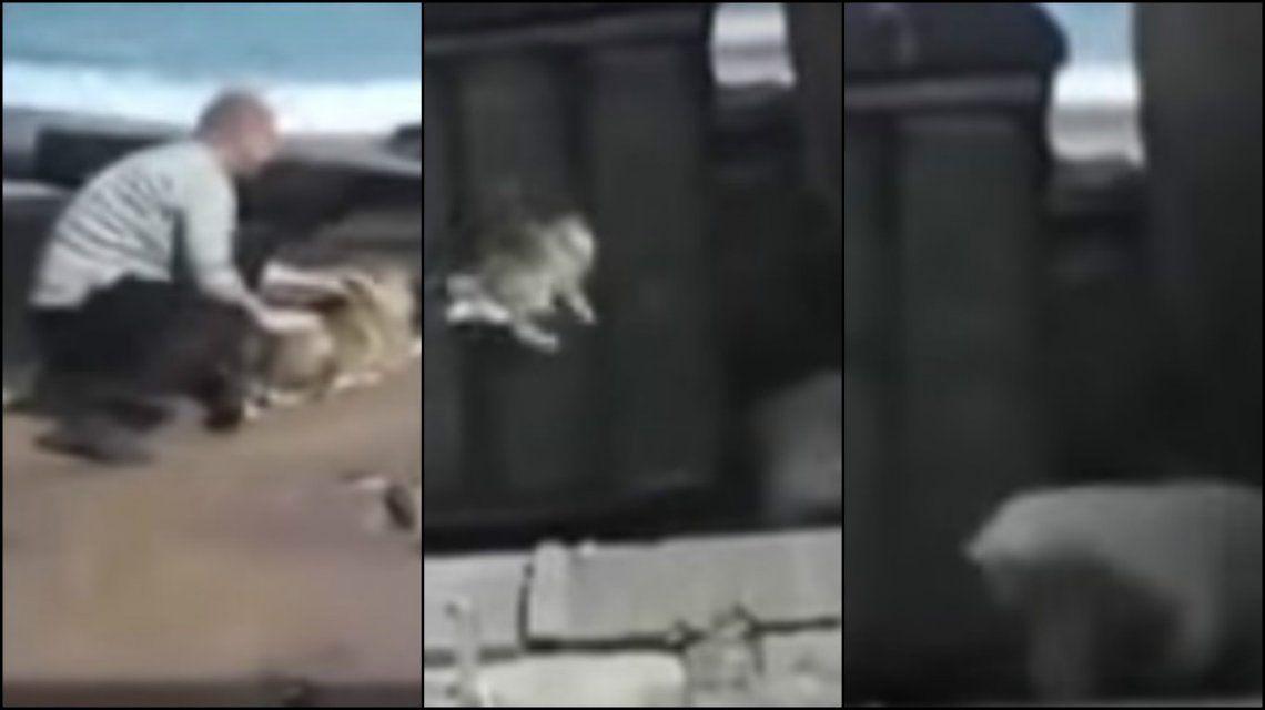 Indignante: arrojó un perro a un oso polar