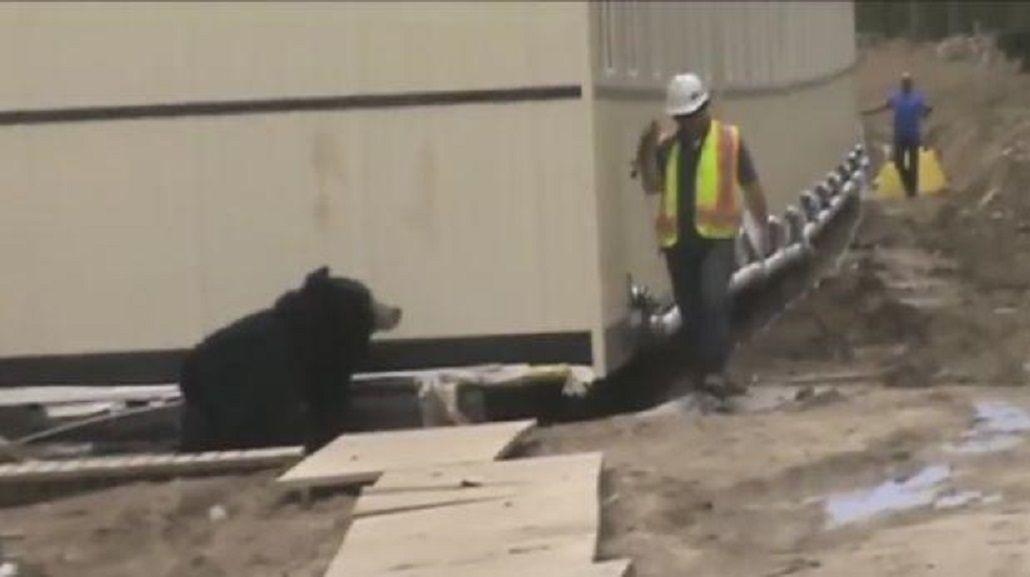 VIDEO: Broma pesada entre trabajadores de la construcción