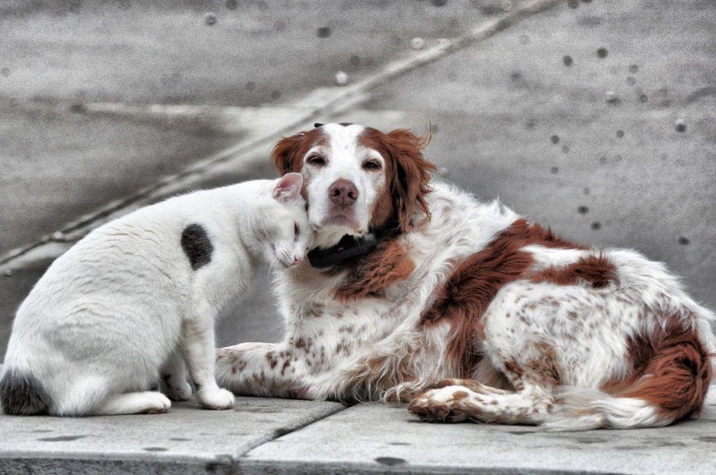 De gatos y perros: hay una mascota cada dos hogares en la Ciudad