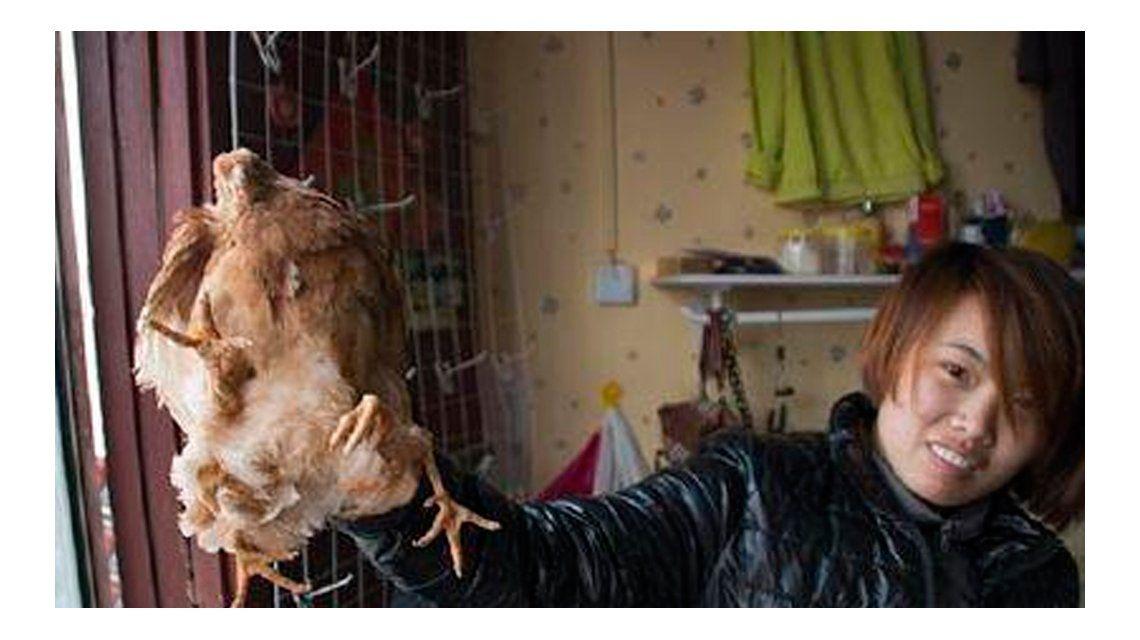 Descubren una gallina de cuatro patas en una granja de China